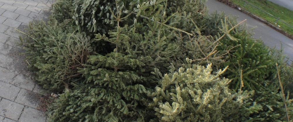 Abgeben, ablegen oder verbrennen - Den Weihnachtsbaum entsorgen