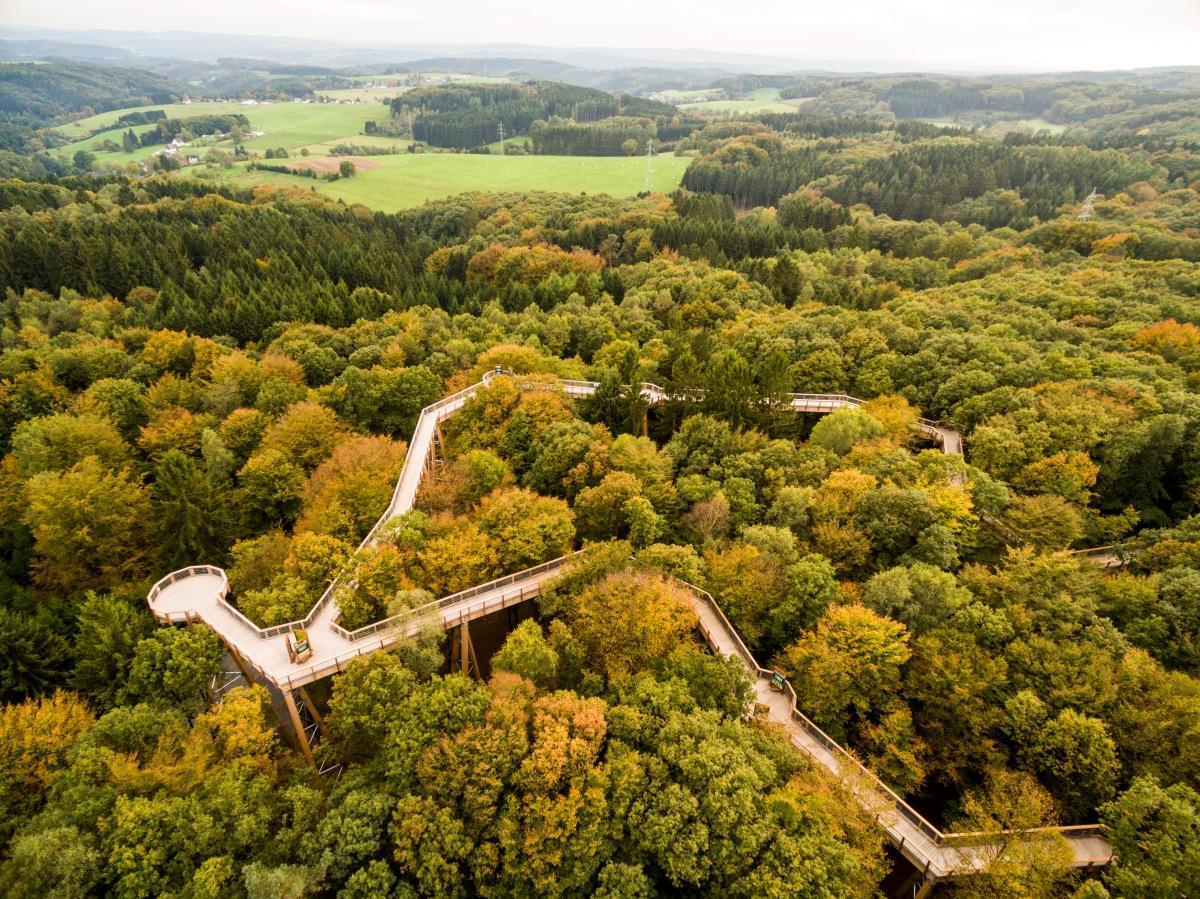 Panarbora, une balade à la cime des arbres !