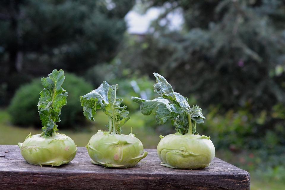 chinese-cabbage-kohlrabi-1573404_960_720.jpg