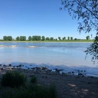 Rhine Clean Up, opération nettoyage des bords du Rhin le 14 septembre 2019 !