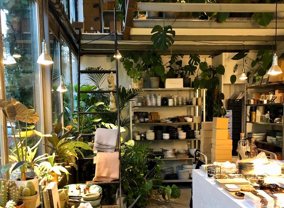 Beyond Studios, concept store, cactus et belles plantes !