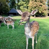 Wildpark, bienvenue dans le monde des animaux de la forêt  !