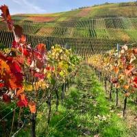 Tourisme en Allemagne : Ahrtal, la vallée de l'Ahr !